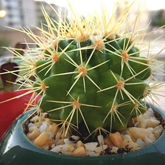 My Tiny Cactus (Mahsa3611) Tags: cactus nature