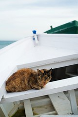 Kitty (Kym.) Tags: andalucía andalusia beach boat cat day4 kitty nerja otherpeoplesgang spain