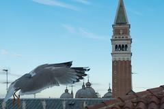 Vista do Hotel Firenze (Denise Alvarez García) Tags: veneza turistica turismo romantico cidade renascença italiana obras de arte monumentos praças igrejas gondolas