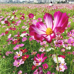 Flowers Nature Outdoors Travel Flower (m810729) Tags: flowers nature outdoors travel flower