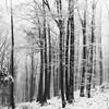 (desomnis) Tags: winter snow frost cold frosty monochrome bw trees forest wood woodland woods nature winterly winterscape winterforest snowcovered blackandwhite blackwhite desomnis tamronsp2470mmf28 canon6d loweraustria austria österreich niederösterreich square squareformat