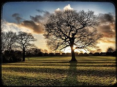 357/366 (jim-green777) Tags: sun kinggeorgevplayingfields 2016 december publicplaces 366project england britain uk littleover derby flare shadow trees cameraphone mobilephotography iphone7