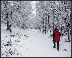 Walking in a Winter Wonderland (Donald Noble) Tags: badenoch highland invernessshire newtonmore scotland colour female flora hill hills hillwalking ice landscape plant red snow track tree trees water winter woman