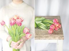 (CarolienCadoni..) Tags: sonyslta99 sal50f14 50mmf14 bokeh dof tulips pink diptych hands