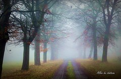 2017-01-08 allée du château(24)f (april-mo) Tags: fog brouillard mist misty foggy wood treesinfog winter bois secretwood alléeduchâteau trees arbres nature