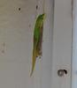 Mo'o (Stonthat) Tags: hawaii gecko animals photography nature moo good luck aumakua lizards photos