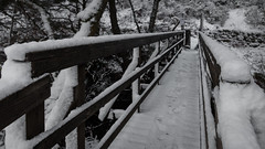 footbridge over the Inchewan burn in Birnam Wood (grahamrobb888) Tags: nikon nikond800 sigma20mmf18 sigma zac dog pet trapfocus snow snowwoods footpath footbridge lines