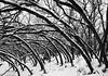 Lurchers (JasonCameron) Tags: black white monochrome mono winter utah tree trees branches bend fold lurch snow cold january