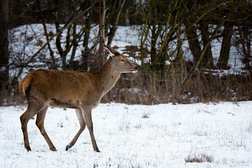 Walking throught the snow