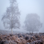 Mist & Frost