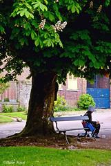Peintre au pied du marronnier (didier95) Tags: village peintre gerberoy marronnier scenedevie