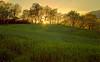 _Behind the trees_ (* landscape photographer *) Tags: italy verde primavera europe valle natura sole paesaggio raggi lucania 2015 nikond90 salvyitaly