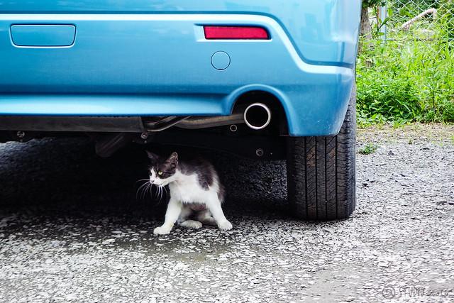 Today's Cat@2015-06-23