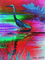 blue  heron (Sonja Parfitt) Tags: bird photomanipulated lostlagoon