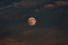 Gibbous Moon (__Aenima__) Tags: moon clouds nikon disc lunar gibbous 55200mm d3100