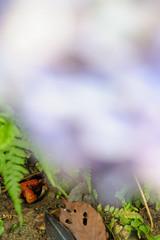 20150704-DS7_5700.jpg (d3_plus) Tags: street sea sky plant flower nature car rain japan garden drive nikon scenery cloudy daily telephoto rainy bloom  tele hydrangea  tamron  shizuoka    dailyphoto touring 28300mm  izu   shimoda 28300        tamron28300mm    minamiizu  tamronaf28300mmf3563     a061  nikon1 telezoomlens d700  tamronaf28300mmf3563xrdildasphericalif nikond700 a061n