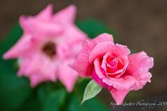 Flowers (stephenquattro) Tags: china flowers plants beijing wonderworld floralfantasy flowersarebeautiful thebestofmimamorsgroups stephenquattro