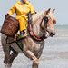 "2015_08_07_Paardenvissers_Oostduinkerke-52 • <a style=""font-size:0.8em;"" href=""http://www.flickr.com/photos/100070713@N08/19783160633/"" target=""_blank"">View on Flickr</a>"