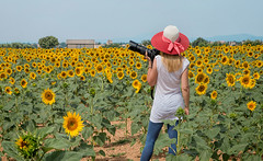 Fotografando in Provenza (marypink) Tags: summer sky france me landscape holidays estate io cielo sunflowers fields provence francia paesaggio vacanze provenza girasoli campi valensole 2470mmf28 nikond800