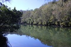 Mooney Mooney Creek (cathm2) Tags: travel trees nature water creek reflections river walking hiking australia nsw centralcoast greatnorthwalk mooneymooney