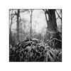 Frozen chain (cardijo) Tags: austria österreich autumn herbst eis ice ilford fp4 rodinal rolleiflex analog film tessar carlzeiss