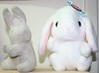 Hopper Introduces Pote (shiroibasketshoes hopper) Tags: bunny bunnies rabbit rabbits loppy cute adorable funny humor