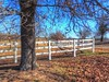 Oak at the Corner (clarkcg photography) Tags: fence whiterail posts slats three tree old oak skyblue fencedfriday blue sky sunny bright driveinthecountry sunshinesunday