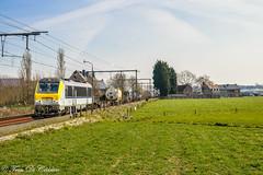 BLOG HLE 1302  Melsele (Tren di Cédrico) Tags: l59 nmbs sncb melsele train trein 1302 cargo belgium belgië blog alstom