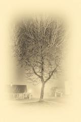 Winter Tree/ Arbre d'Hiver (L'Oeil De Palo) Tags: hiver sweet douceur 700d canon blackandwhite noiretblanc tree poésie campagne arbre