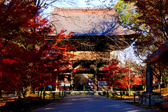 Nioh Gate of Kuhonbutsu Joshinji Temple in Setagaya, Tokyo : 仁王門(九品仏浄真寺) (Dakiny) Tags: 2016 winter december japan tokyo setagaya nature landscape park street plant tree maple autumnleaves red nikon d7000 afsdxnikkor35mmf18g nikonafsdxnikkor35mmf18g nikonclubit
