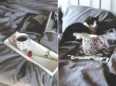 """""""You are just lovely..."""" (CarolienCadoni..) Tags: sonyslta99 sony sal50f14 50mmf14 bokeh lazy cat tea light cup photography diptych"""