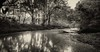 Guardians of the Hidden Swamp (JDS Fine Art & Fashion Photography) Tags: trees river swamp water sunset blackwhite