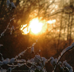 Winter (Natali Antonovich) Tags: winter christmasholidays christmas snow frost nature tervuren belgium belgique belgie sun light