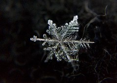 It's cold , but beautiful! (DanielConstantinescu) Tags: macromondays inspiredbyasong