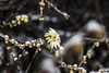 Flowers (frederik89) Tags: fiori flowers winter inverno neve snow ghiaccio ice nikon nikon3100 allaperto natura