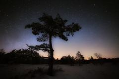 the lonely (Rainer Schund) Tags: lonely stars nacht nikon high iso rhön germany deutschland winter schnee baum tree wald sterne kalt nikond4 14mm