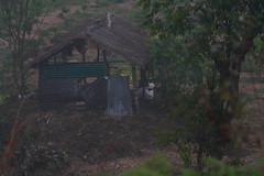 Isolated hut, inside Periyar National Park (ilovethirdplanet) Tags: hut morning idukki kerala india ind
