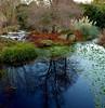 Winter Colours (louisemccall53) Tags: winter walk january 2017 colour blue red green nikond3400 botanicalgardens garden scotland edinburgh uk britain nature natural nikon edinburghlife realedinburgh