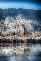 Frosted Reflection (Alex M. Wolf) Tags: canon eos5dmkiii winter lake woerth wörthersee water frost hoarfrost sattnitz blue sky reflection tree trees baum bäume ice inverno invernale gelo alberi aqua alexmwolf lago lac hiver hivernal gel ombre árbol invierno helada