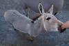 DSC03020 (Christine Gerhardt) Tags: deutschland esel stuttgart tierfoto wilhelma zoo