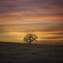 a lone tree. (3dRabbit) Tags: denver co usa tree lone lonely nature light morning dawn landscape art sungjinahn nikon iso64