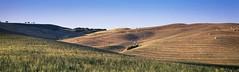Hay Bales on Sunlit Hills (rubberducky_me) Tags: italy tuscany hay farm hills europe farmer linhoftechnorama velvia panorama