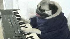 Photo (plaincut) Tags: music dog hot animals funny piano pug gif gifs viral buzzing trending plaincut