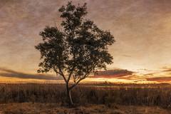 Lone Tree (Jeff 05) Tags: sunset nikon onone 2470mmf28 lakewyangan nikond810 perfecteffects perfectphotosuite9