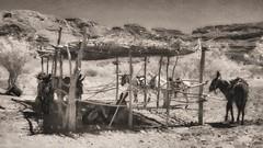 Boquillas, Mexico - Horses, Donkeys