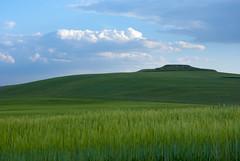 Entre el cielo y el suelo (javipaper) Tags: verde green nubes dueñas cerrato cerratopalentino