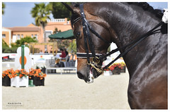 Competition time (MaredithFh) Tags: horses animals caballos photography spain competicion deporte met horseriding equitacion olivanova mediterraneanequestriantour maredithphotography