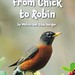 From Chick to Robin