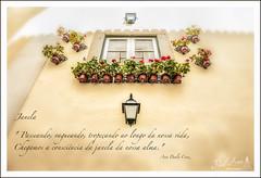 Janela_1 (By Ana Paula Cruz) Tags: flores arte lisboa janela fotografia alfama pensamento varanda