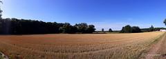 sunday morning walk (photos4dreams) Tags: panorama landscape corn walk sunday grain feld wiese mais landschaft wald sonntag korn spaziergang photos4dreams photos4dreamz p4d